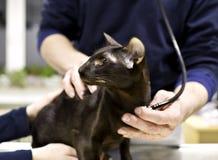 Veterinary examination Royalty Free Stock Photos
