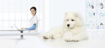 Veterinary examination dog, veterinarian with computer on table. In vet clinic stock photo