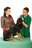 Veterinary examine dog Royalty Free Stock Images
