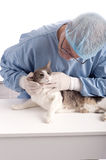 Veterinary examining a cat Royalty Free Stock Images