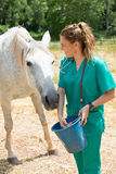 Veterinary on a farm Royalty Free Stock Image