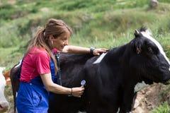 Veterinary on a farm royalty free stock photos