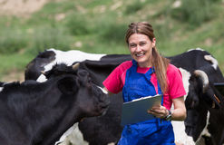 Veterinary on a farm stock photography