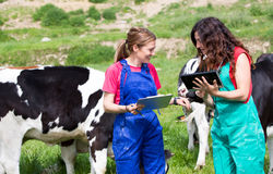 Veterinary on a farm stock photography
