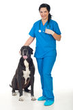 Veterinary with great dane dog Royalty Free Stock Photos