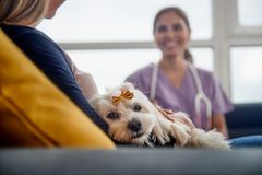 Veterinary House Call With Doctor Dog Owner And Pet. Young hispanic women working as veterinary, vet talking to dog owner on house call. Animal doctor during stock photo