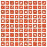 100 veterinary icons set grunge orange. 100 veterinary icons set in grunge style orange color  on white background vector illustration Royalty Free Illustration