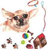 Veterinary kit comprising Chihuahua and accessories for dogs, wa vector illustration