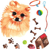 Veterinary kit comprising Pomeranian dog and accessories for dog Stock Photography