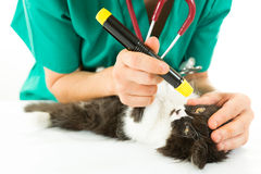 Veterinary with kitten Royalty Free Stock Photography