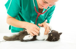 Veterinary with kitten Stock Image