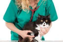 Veterinary with kitten Stock Photos