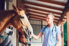 Veterinary Medicine At The Farm Royalty Free Stock Images