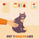 Veterinary medicine hospital, doctor with cat. Health care for wild or domestic animals. Veterinary medicine hospital, clinic for animals. Doctor with a cat Vector Illustration