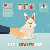 Veterinary medicine hospital, doctor with cute rabbit. Health care or treatment for wild or domestic animals. Stock Image