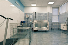 Veterinary orthopedics treatment room Royalty Free Stock Photos