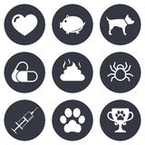 Veterinary, pets icons. Dog paw, syringe signs Stock Photo