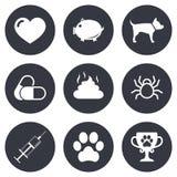 Veterinary, pets icons. Dog paw, syringe signs Stock Photo