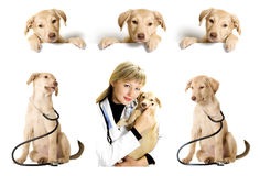 Veterinary set Royalty Free Stock Image