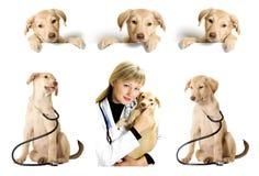 Veterinary set Royalty Free Stock Image