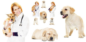 Veterinary set Royalty Free Stock Photography
