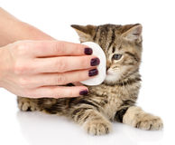 Veterinary surgeon wipes eyes to a cat. isolated on white backgr Stock Photos