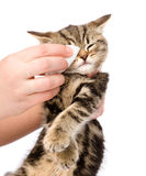 Veterinary surgeon wipes eyes to a cat. isolated on white backgr. Ound Stock Photos
