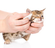 Veterinary surgeon wipes eyes to a cat. isolated on white Royalty Free Stock Photography