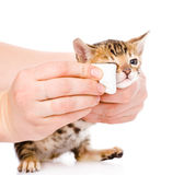 Veterinary surgeon wipes eyes to a cat. isolated on white Royalty Free Stock Images