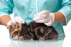 Veterinary survey Stock Photos