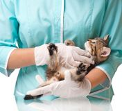 Veterinary survey Stock Images