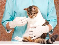 Veterinary survey Royalty Free Stock Images