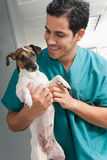 Veterinary taking care of pet. Picture of a veterinary taking care of pet Royalty Free Stock Images