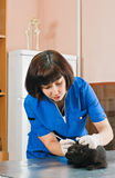 Veterinary woman Stock Photography
