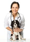 Veterinary woman with spaniel Royalty Free Stock Image