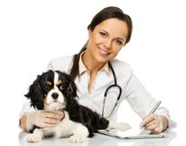 Veterinary woman with spaniel Royalty Free Stock Photo