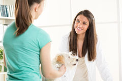 At the veterinary Royalty Free Stock Image