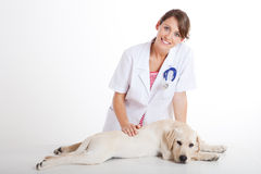 Veterinay prenant soin d'un crabot Photos stock