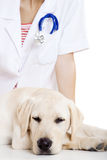 Veterinay taking care of a dog Royalty Free Stock Image