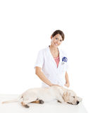Veterinay taking care of a dog Stock Image