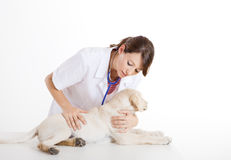 Veterinay taking care of a dog Royalty Free Stock Images