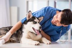 veterinär Fotografering för Bildbyråer