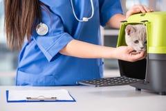 veterinär Royaltyfri Fotografi