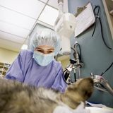 veterinär- kirurgi Arkivfoto