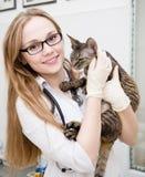 Veterinär med katten i veterinär- klinik Arkivbild