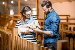 Veternians with baby goat Royalty Free Stock Images