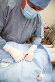 Veterniarian performing neuter operation on dog Stock Image