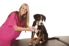Veterninarian woma listen to dogs heart Royalty Free Stock Photography