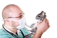 veterynary стоковое изображение rf