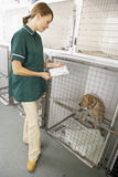 Vetinary Nurse Checking Sick Animal In Pen Royalty Free Stock Photos